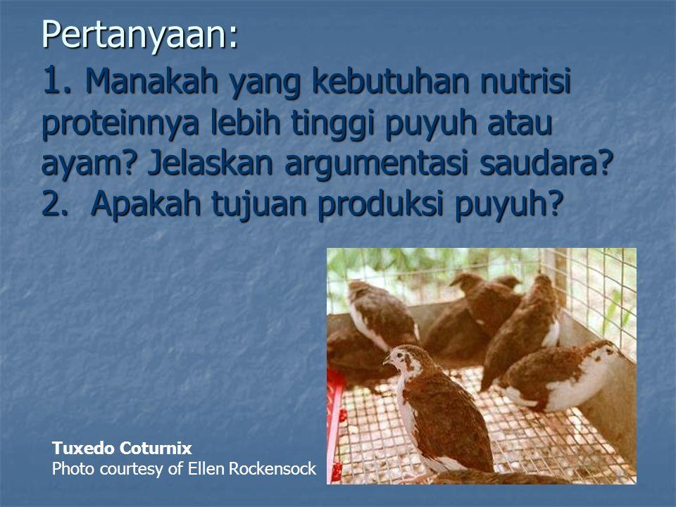 Pertanyaan: 1. Manakah yang kebutuhan nutrisi proteinnya lebih tinggi puyuh atau ayam Jelaskan argumentasi saudara 2. Apakah tujuan produksi puyuh