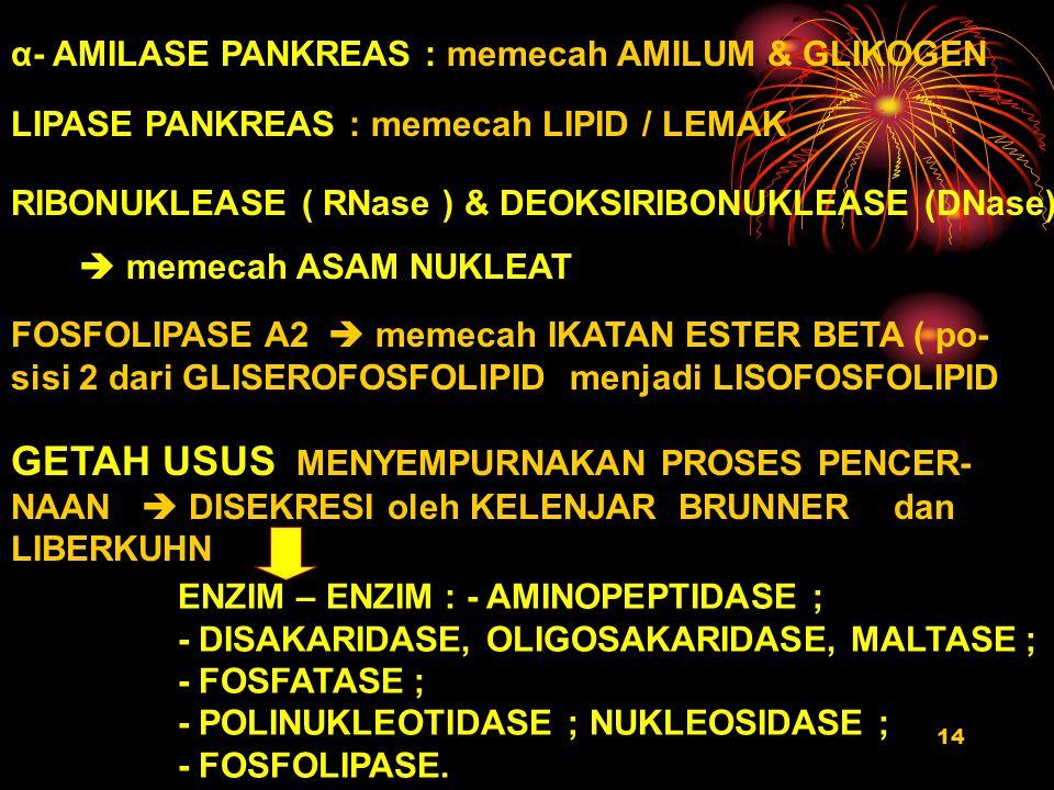 α- AMILASE PANKREAS : memecah AMILUM & GLIKOGEN