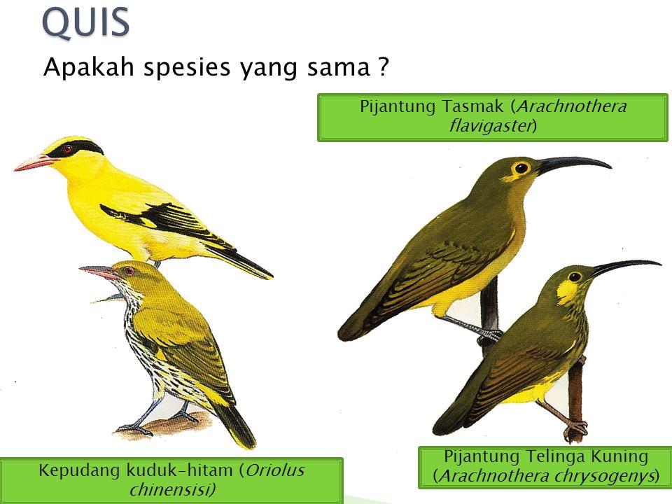 QUIS Apakah spesies yang sama