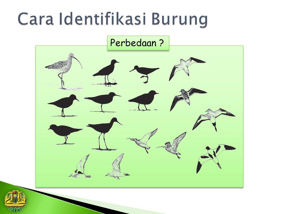 Cara Identifikasi Burung