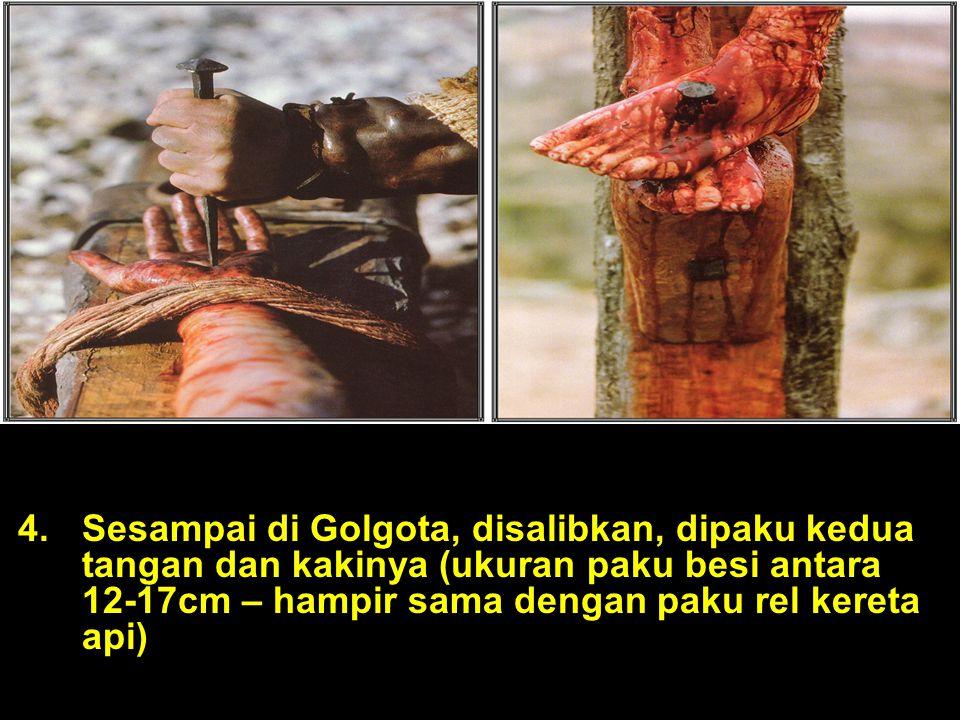 Sesampai di Golgota, disalibkan, dipaku kedua tangan dan kakinya (ukuran paku besi antara 12-17cm – hampir sama dengan paku rel kereta api)