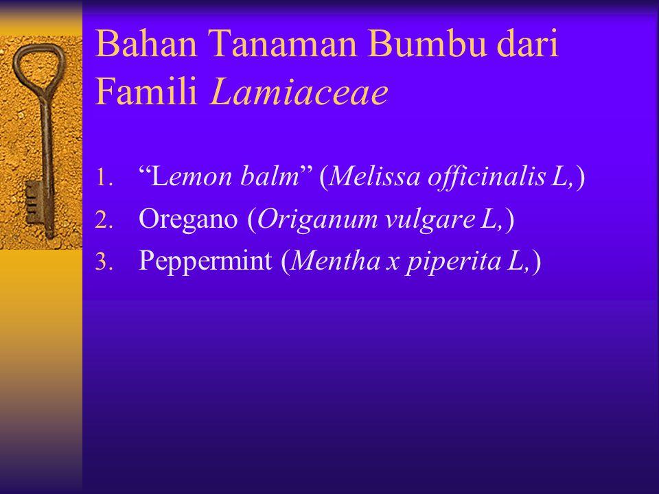 Bahan Tanaman Bumbu dari Famili Lamiaceae