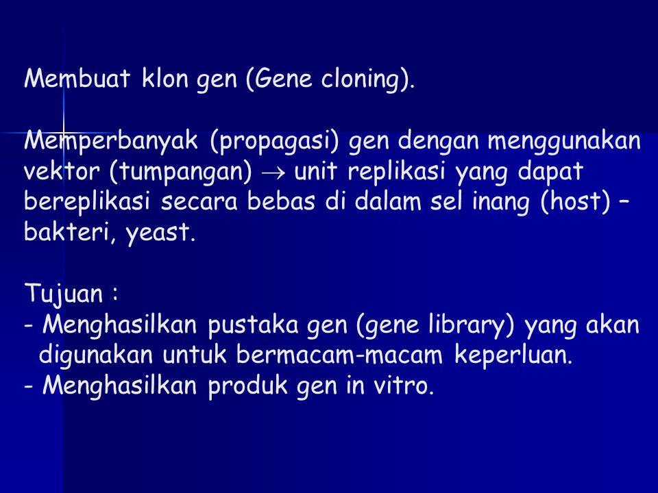 Membuat klon gen (Gene cloning)