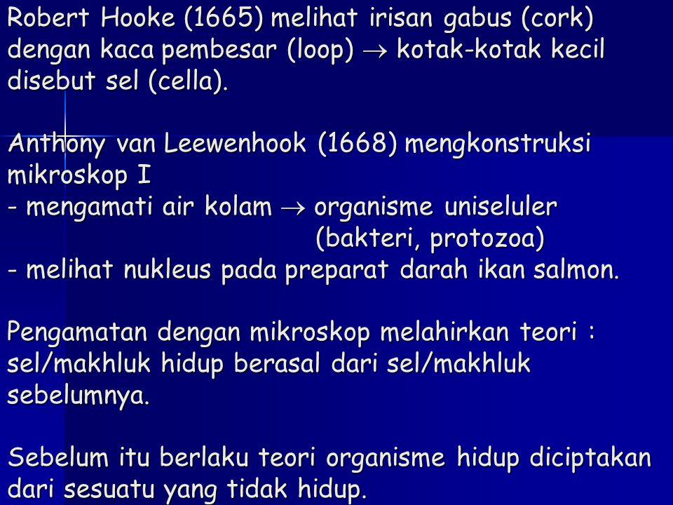 Robert Hooke (1665) melihat irisan gabus (cork) dengan kaca pembesar (loop)  kotak-kotak kecil disebut sel (cella).