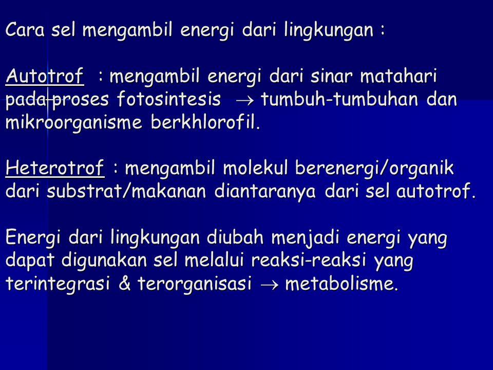Cara sel mengambil energi dari lingkungan : Autotrof : mengambil energi dari sinar matahari pada proses fotosintesis  tumbuh-tumbuhan dan mikroorganisme berkhlorofil.