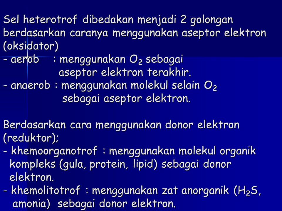 Sel heterotrof dibedakan menjadi 2 golongan berdasarkan caranya menggunakan aseptor elektron (oksidator) - aerob : menggunakan O2 sebagai aseptor elektron terakhir.
