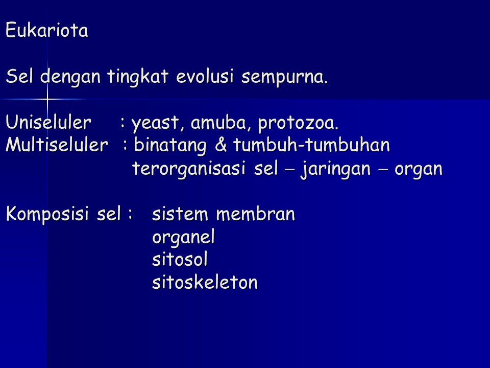 Eukariota Sel dengan tingkat evolusi sempurna. Uniseluler