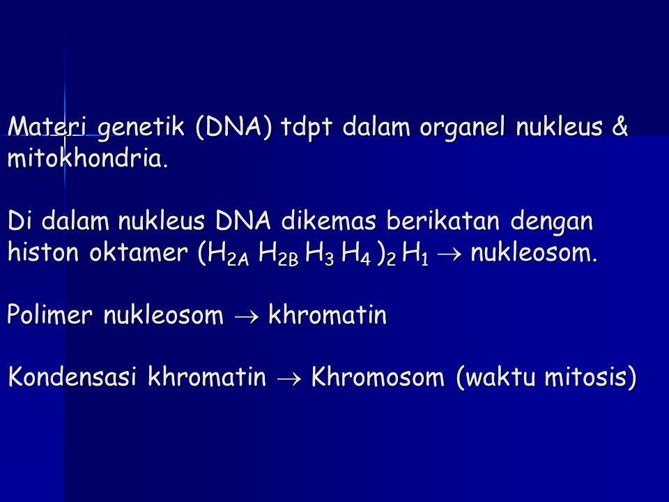 Materi genetik (DNA) tdpt dalam organel nukleus & mitokhondria