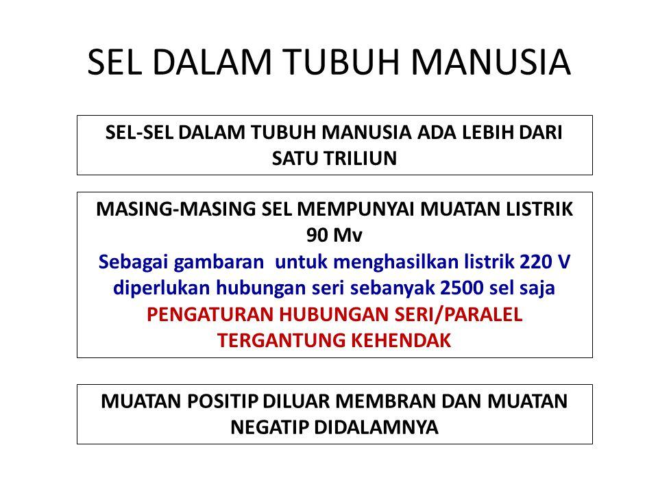 SEL DALAM TUBUH MANUSIA