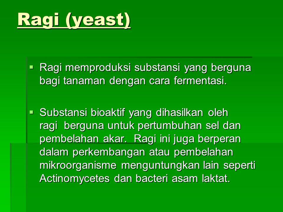 Ragi (yeast) Ragi memproduksi substansi yang berguna bagi tanaman dengan cara fermentasi.