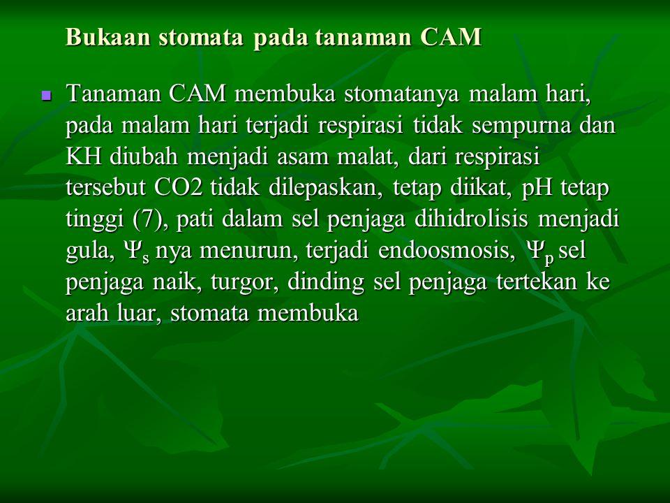 Bukaan stomata pada tanaman CAM