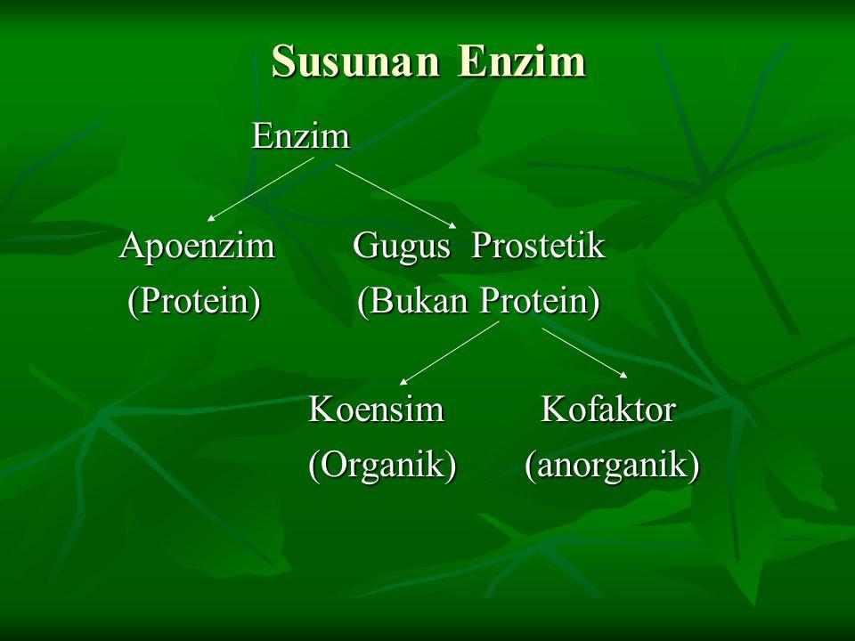 Susunan Enzim Enzim Apoenzim Gugus Prostetik (Protein) (Bukan Protein)