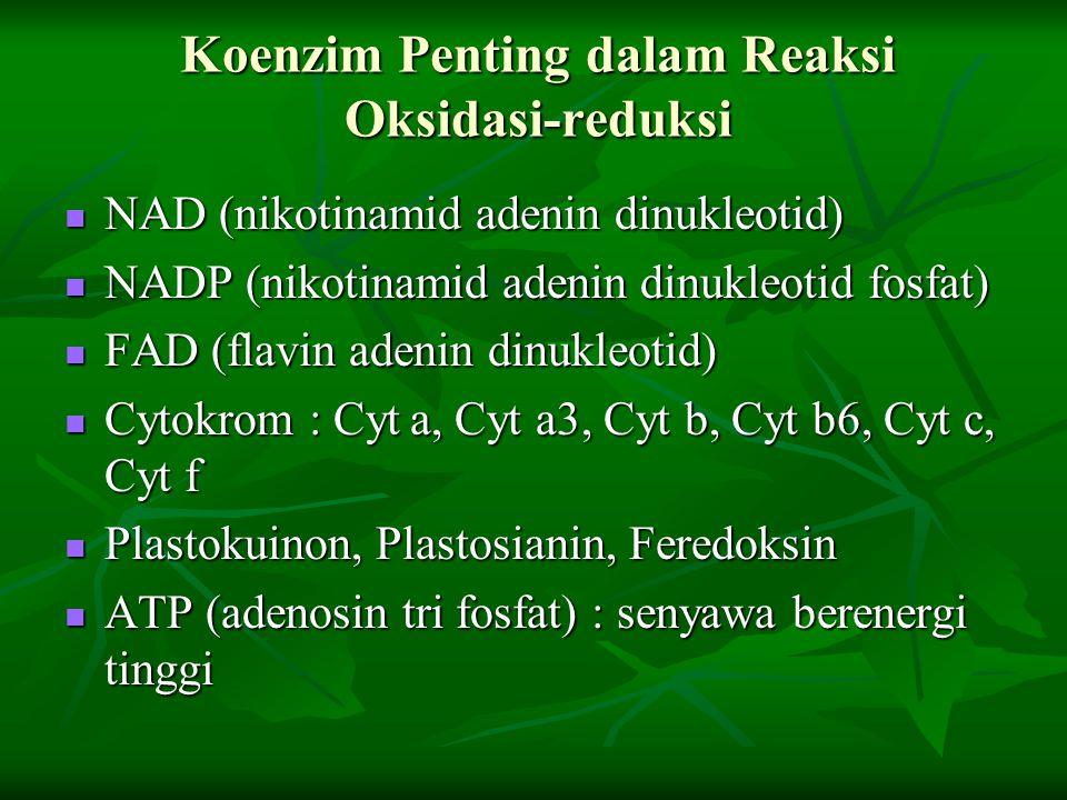 Koenzim Penting dalam Reaksi Oksidasi-reduksi