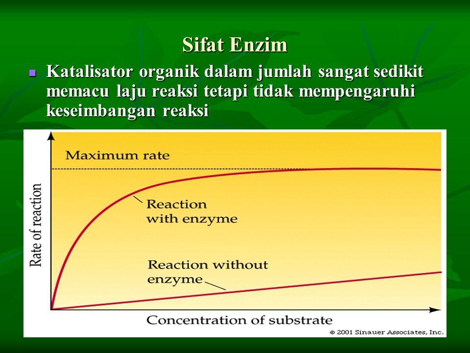 Sifat Enzim Katalisator organik dalam jumlah sangat sedikit memacu laju reaksi tetapi tidak mempengaruhi keseimbangan reaksi.