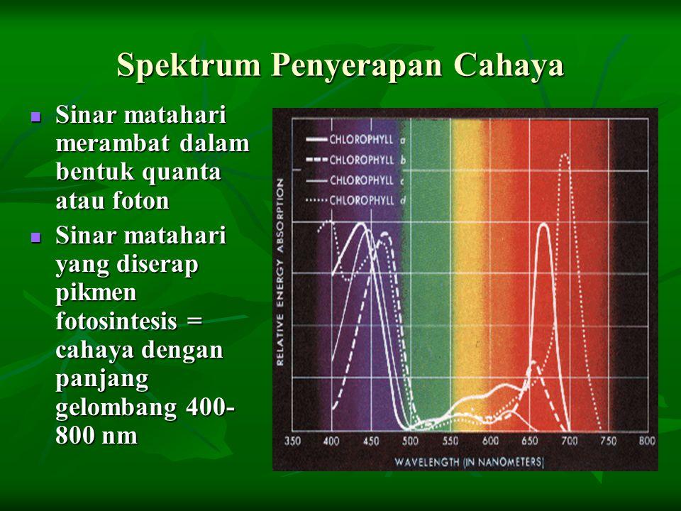 Spektrum Penyerapan Cahaya