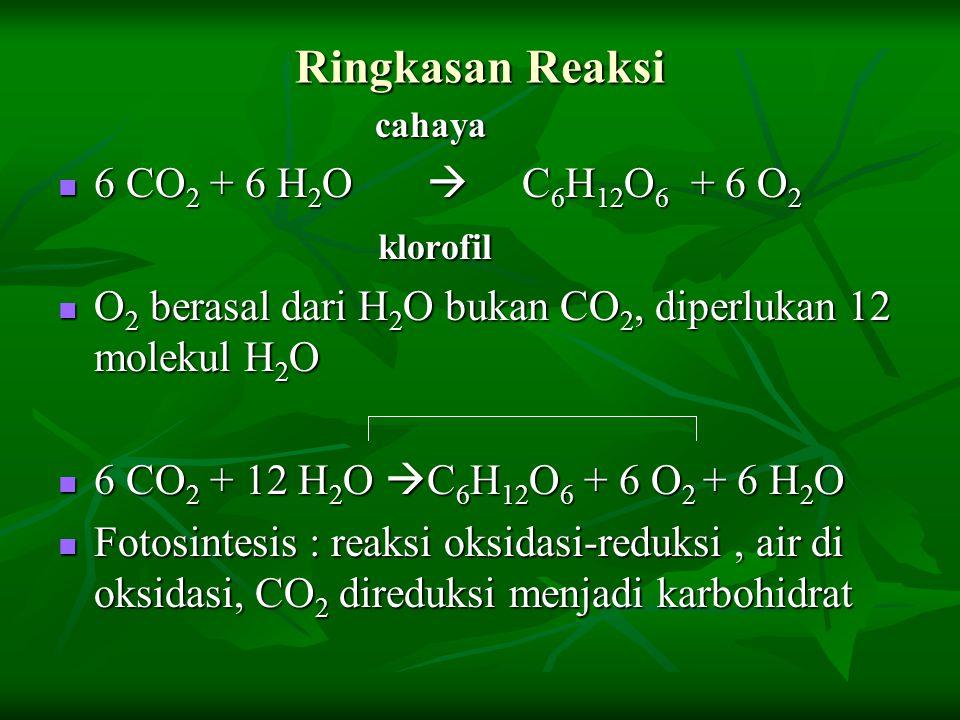 Ringkasan Reaksi 6 CO2 + 6 H2O  C6H12O6 + 6 O2 klorofil