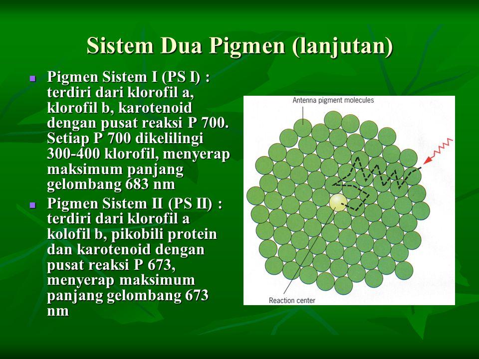 Sistem Dua Pigmen (lanjutan)