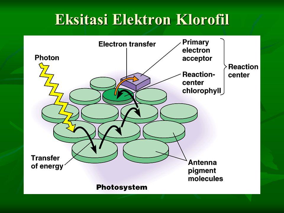Eksitasi Elektron Klorofil