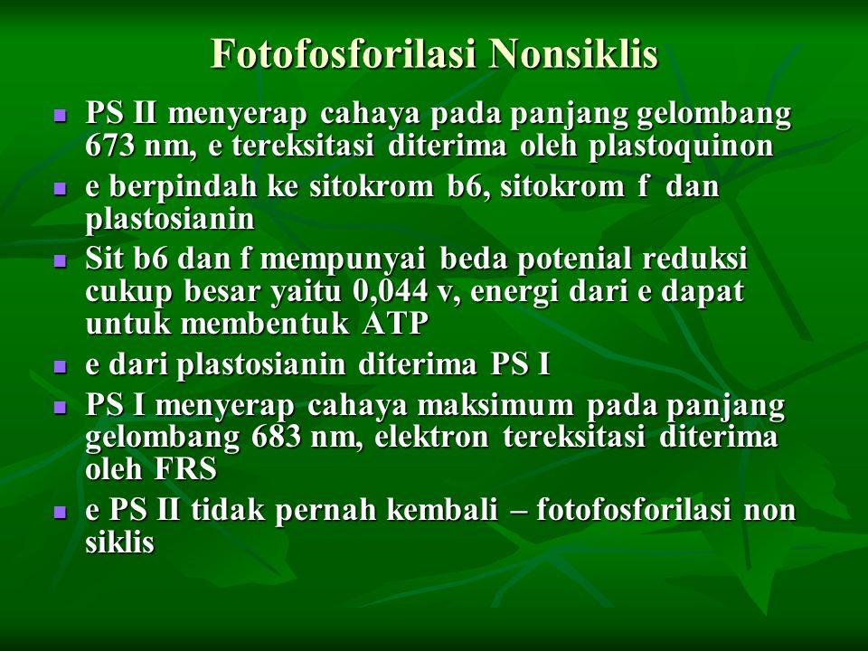 Fotofosforilasi Nonsiklis