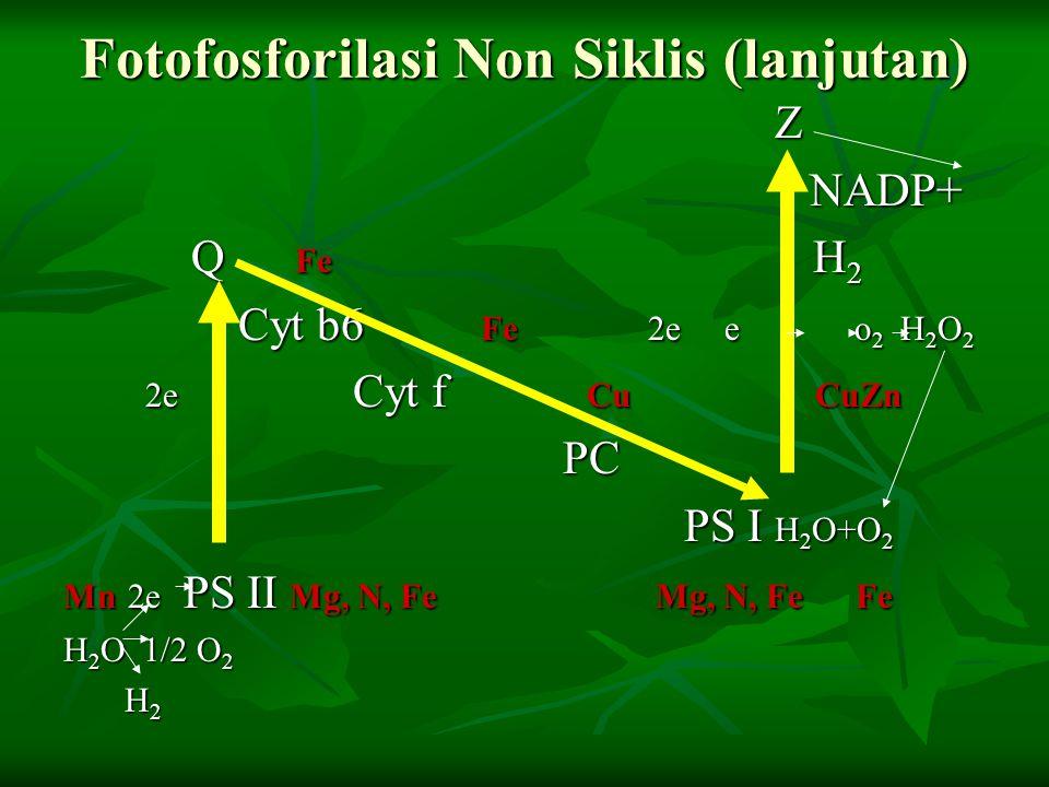 Fotofosforilasi Non Siklis (lanjutan)