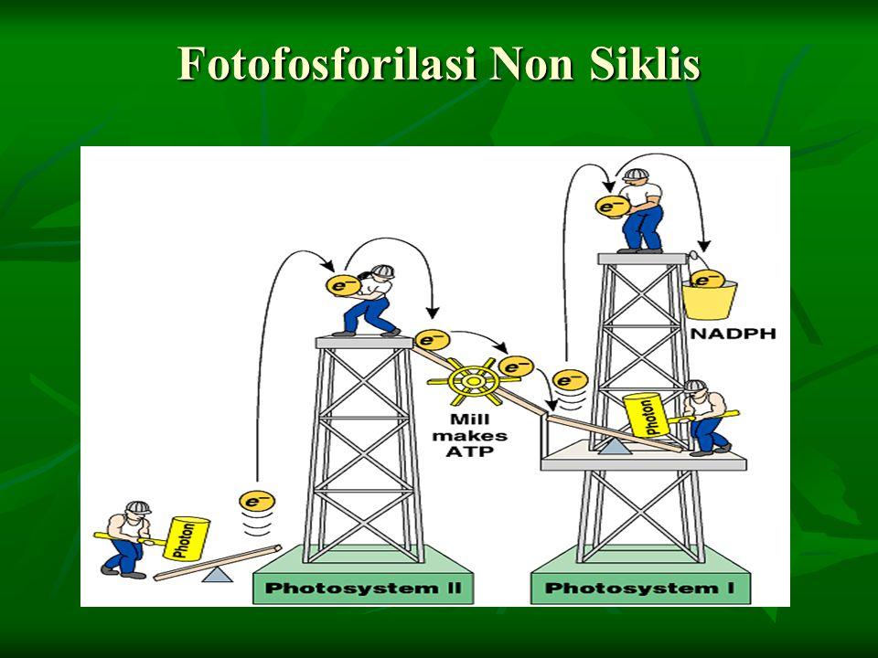 Fotofosforilasi Non Siklis