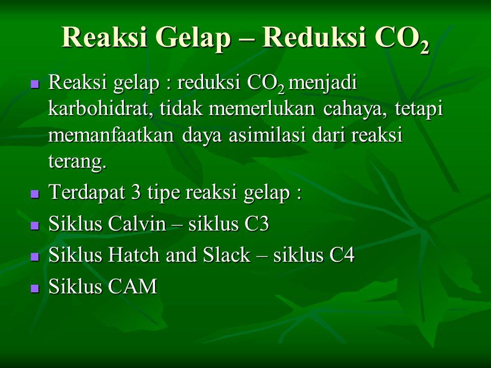 Reaksi Gelap – Reduksi CO2