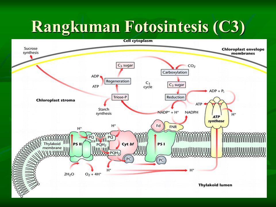 Rangkuman Fotosintesis (C3)