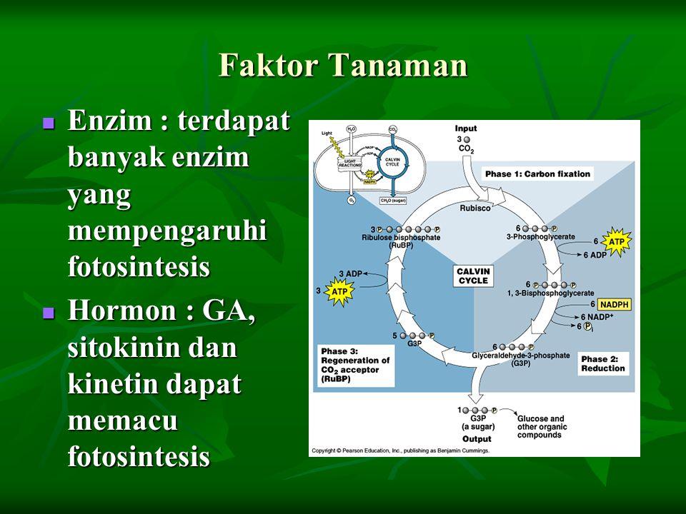 Faktor Tanaman Enzim : terdapat banyak enzim yang mempengaruhi fotosintesis.