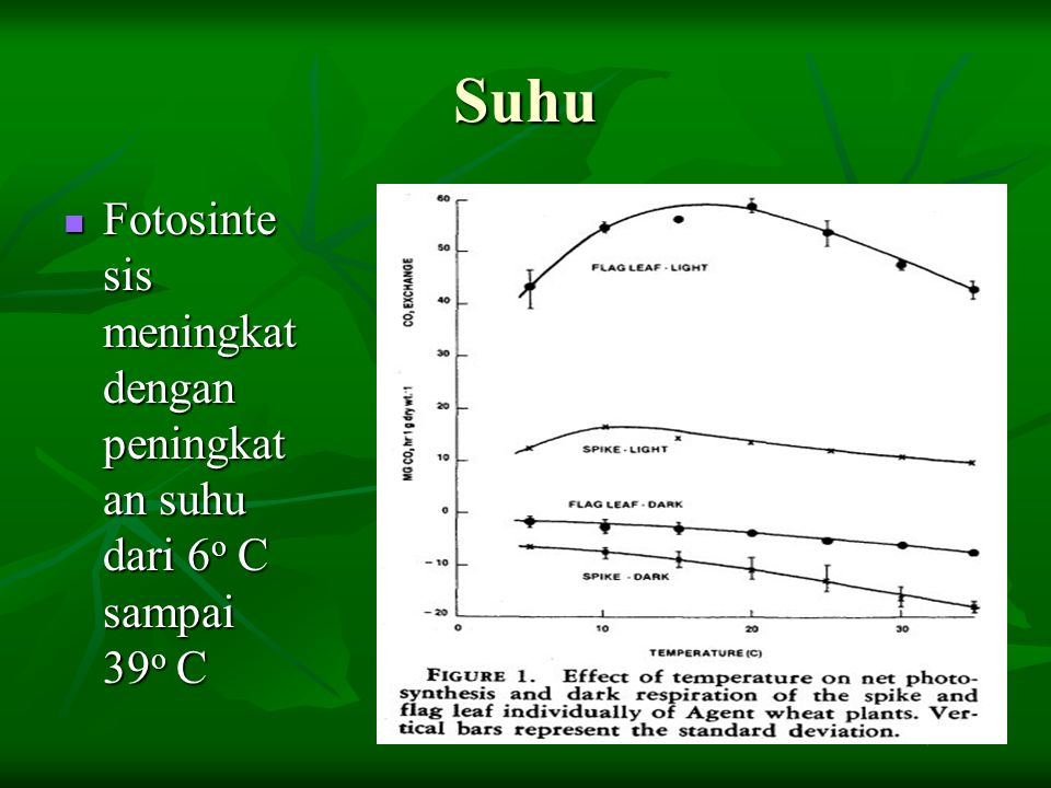 Suhu Fotosinte sis meningkat dengan peningkatan suhu dari 6o C sampai 39o C