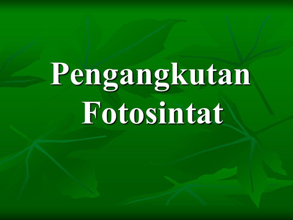Pengangkutan Fotosintat
