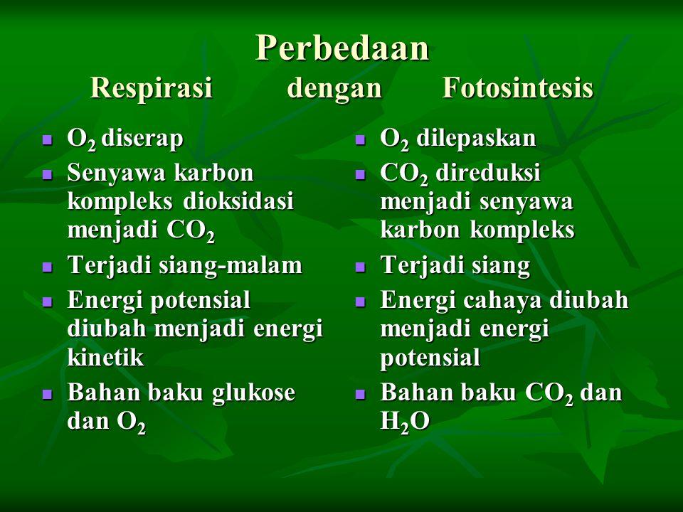 Perbedaan Respirasi dengan Fotosintesis