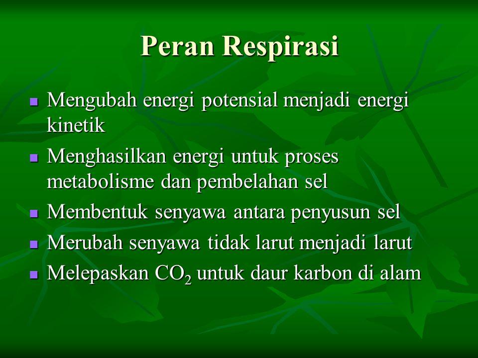 Peran Respirasi Mengubah energi potensial menjadi energi kinetik