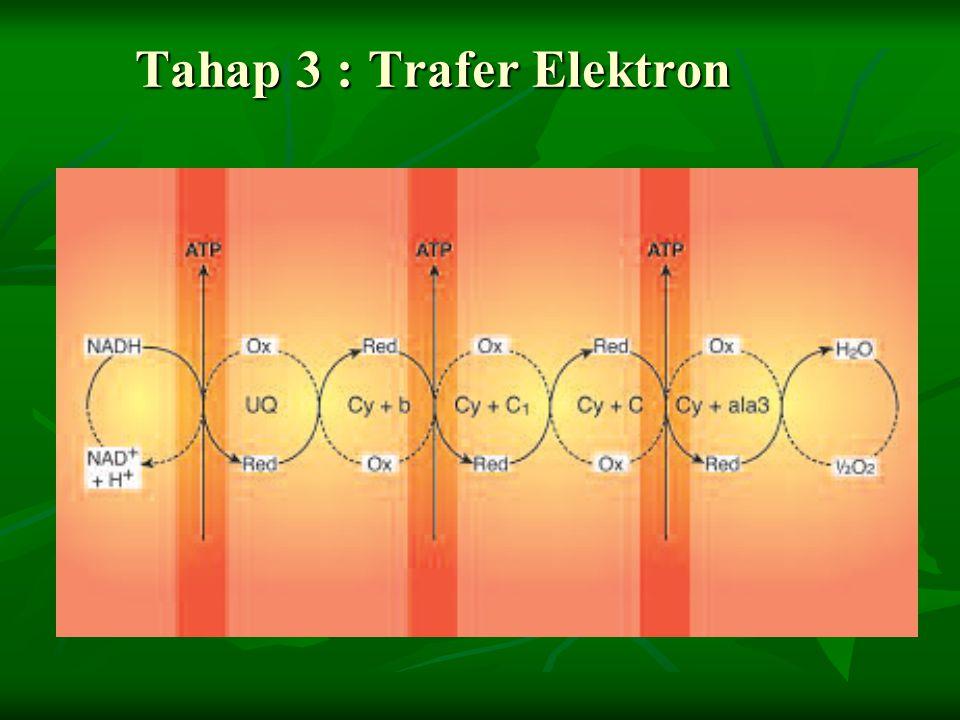 Tahap 3 : Trafer Elektron