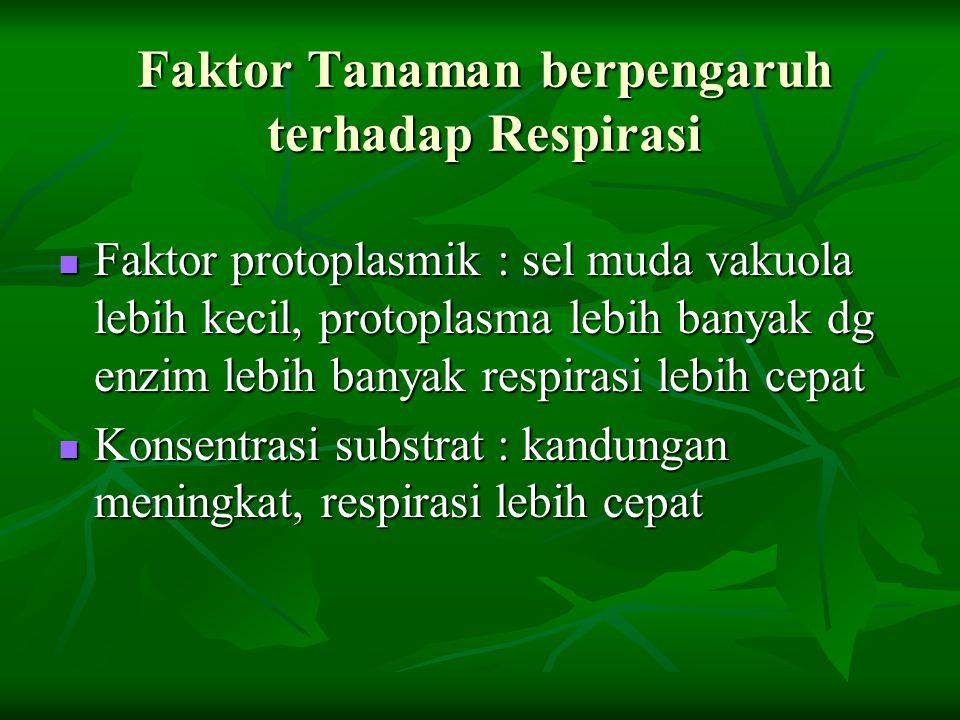 Faktor Tanaman berpengaruh terhadap Respirasi