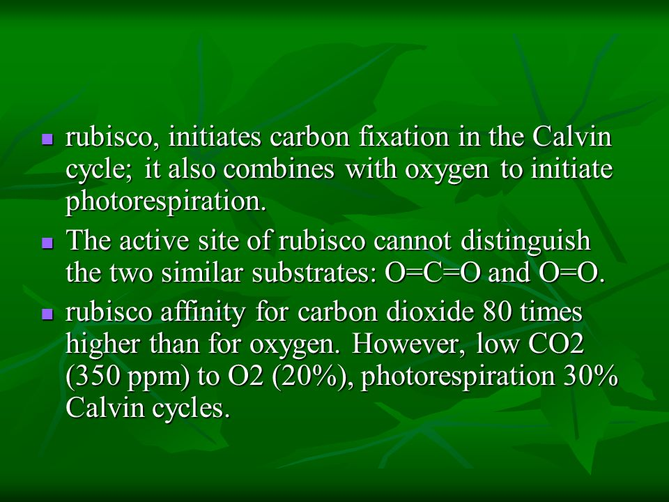 rubisco, initiates carbon fixation in the Calvin cycle; it also combines with oxygen to initiate photorespiration.