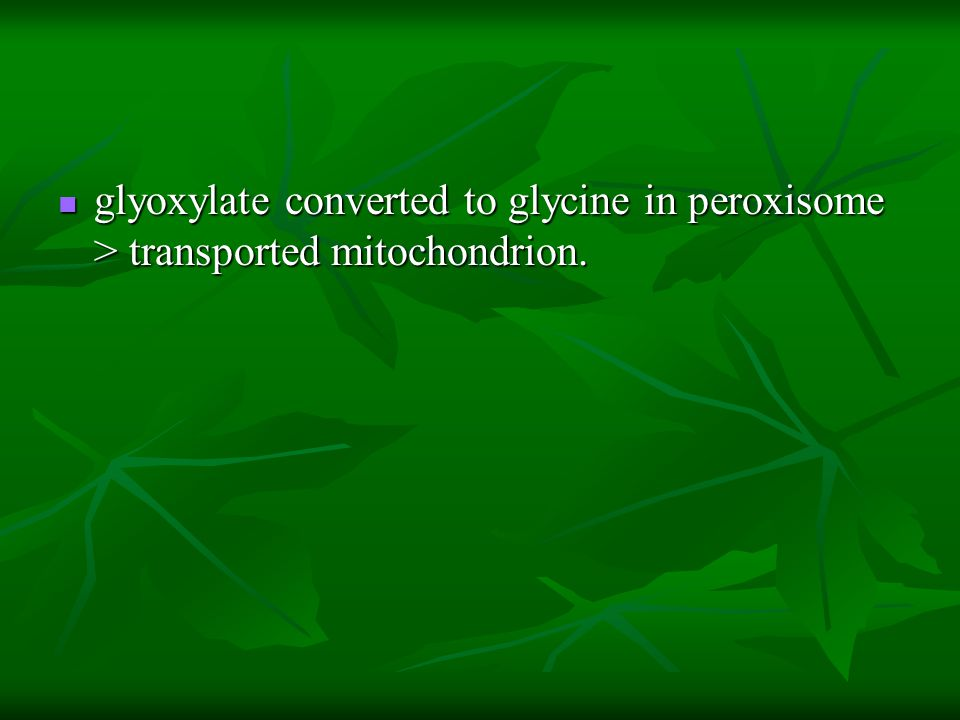glyoxylate converted to glycine in peroxisome > transported mitochondrion.