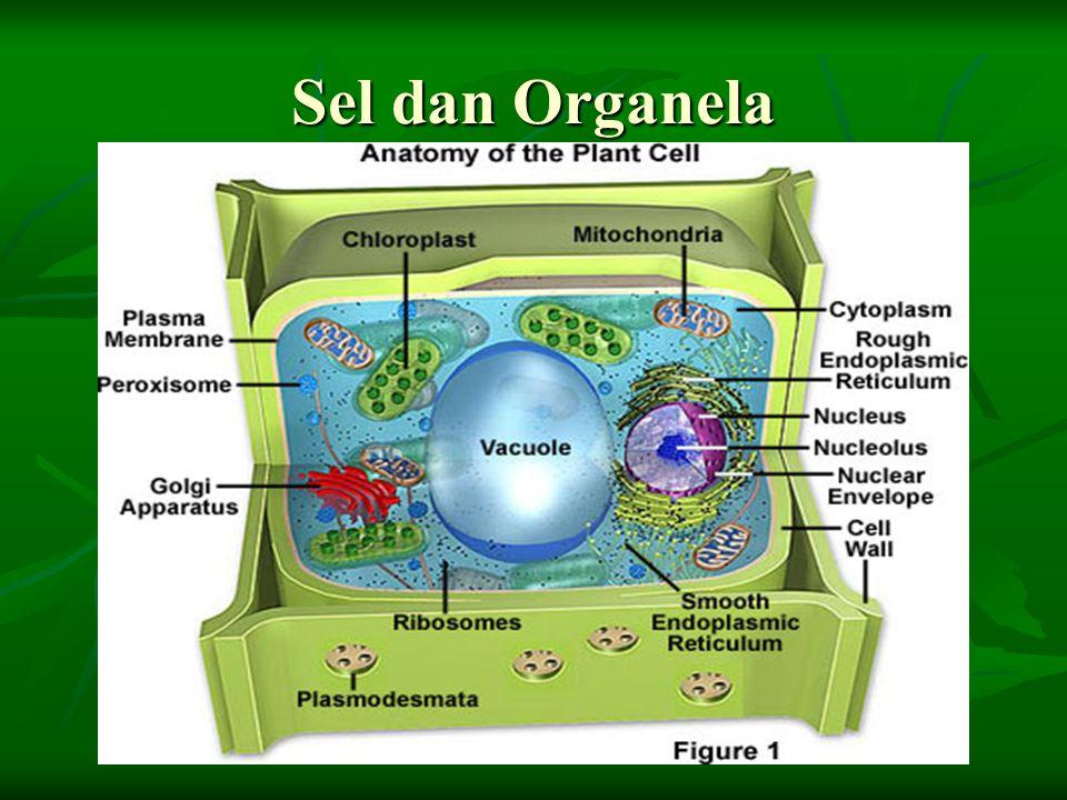 Sel dan Organela