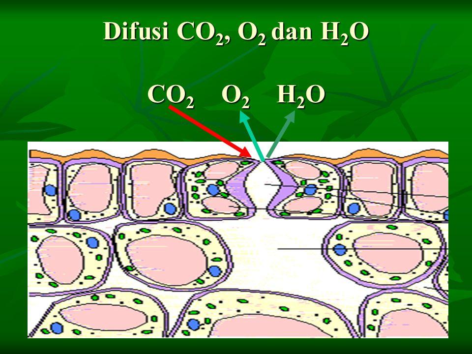 Difusi CO2, O2 dan H2O CO2 O2 H2O