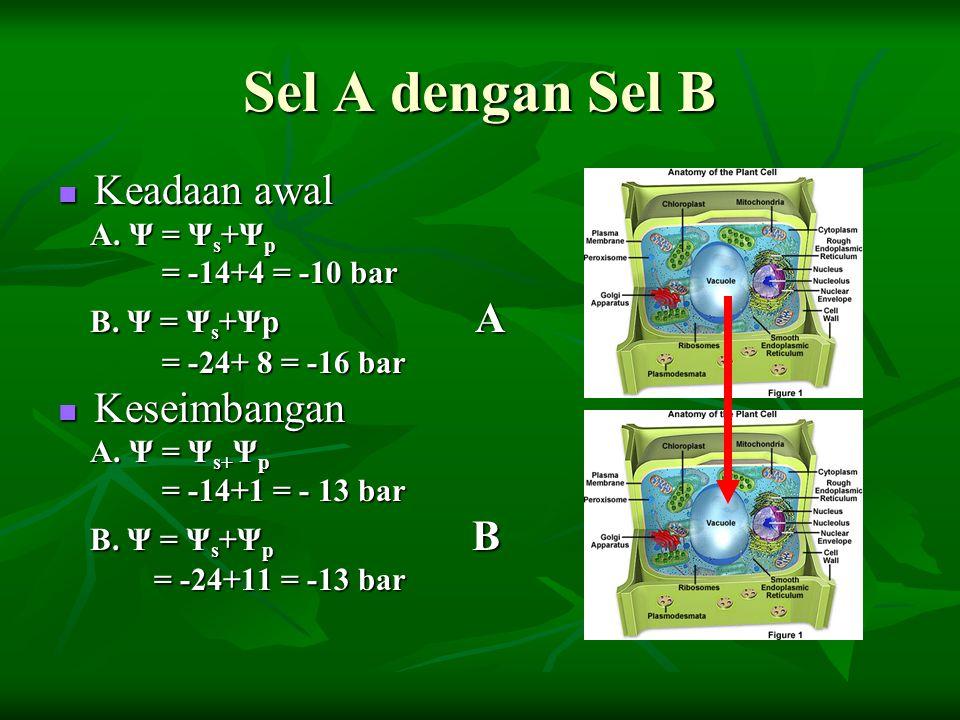 Sel A dengan Sel B Keadaan awal Keseimbangan A. Ψ = Ψs+Ψp