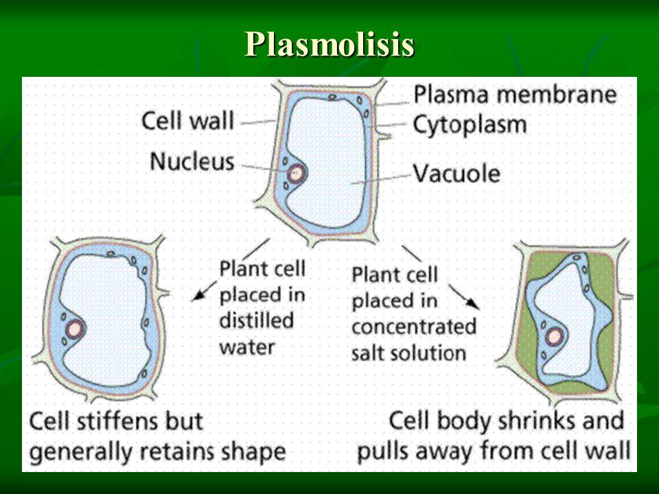 Plasmolisis