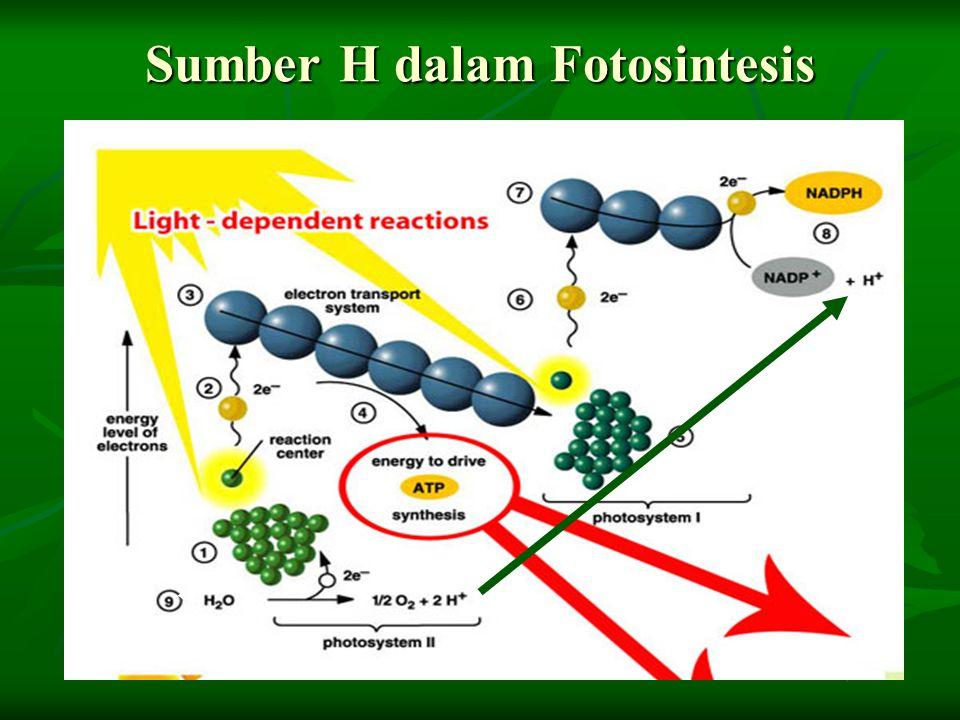 Sumber H dalam Fotosintesis