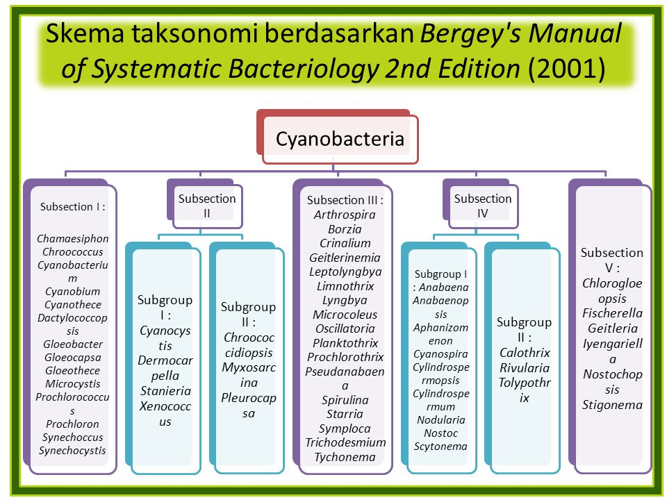 Skema taksonomi berdasarkan Bergey s Manual of Systematic Bacteriology 2nd Edition (2001)