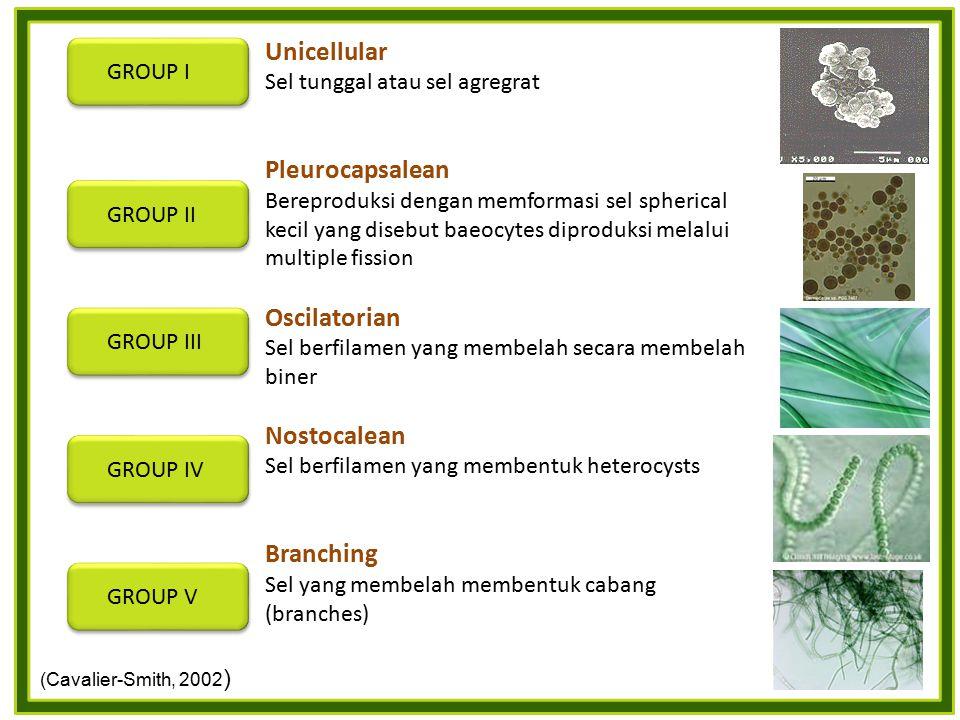 Unicellular Pleurocapsalean Oscilatorian Nostocalean Branching