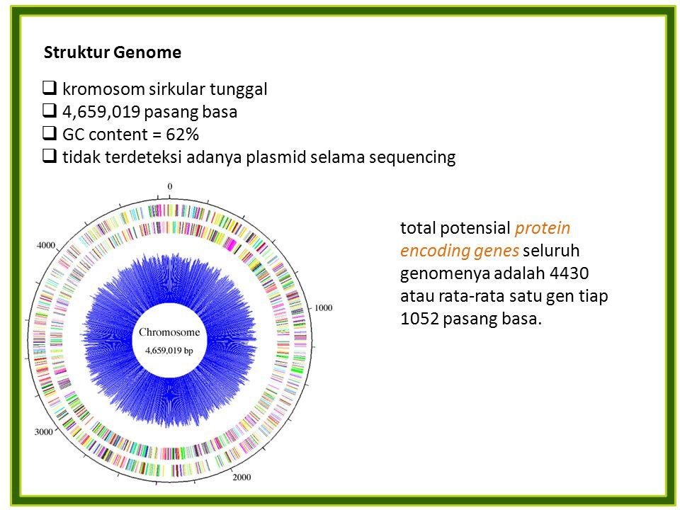 Struktur Genome kromosom sirkular tunggal. 4,659,019 pasang basa. GC content = 62% tidak terdeteksi adanya plasmid selama sequencing.