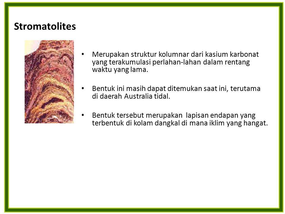 Stromatolites Merupakan struktur kolumnar dari kasium karbonat yang terakumulasi perlahan-lahan dalam rentang waktu yang lama.