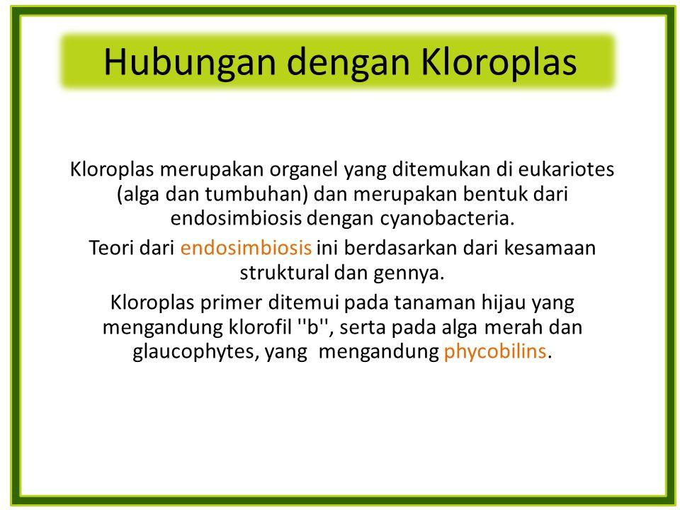 Hubungan dengan Kloroplas