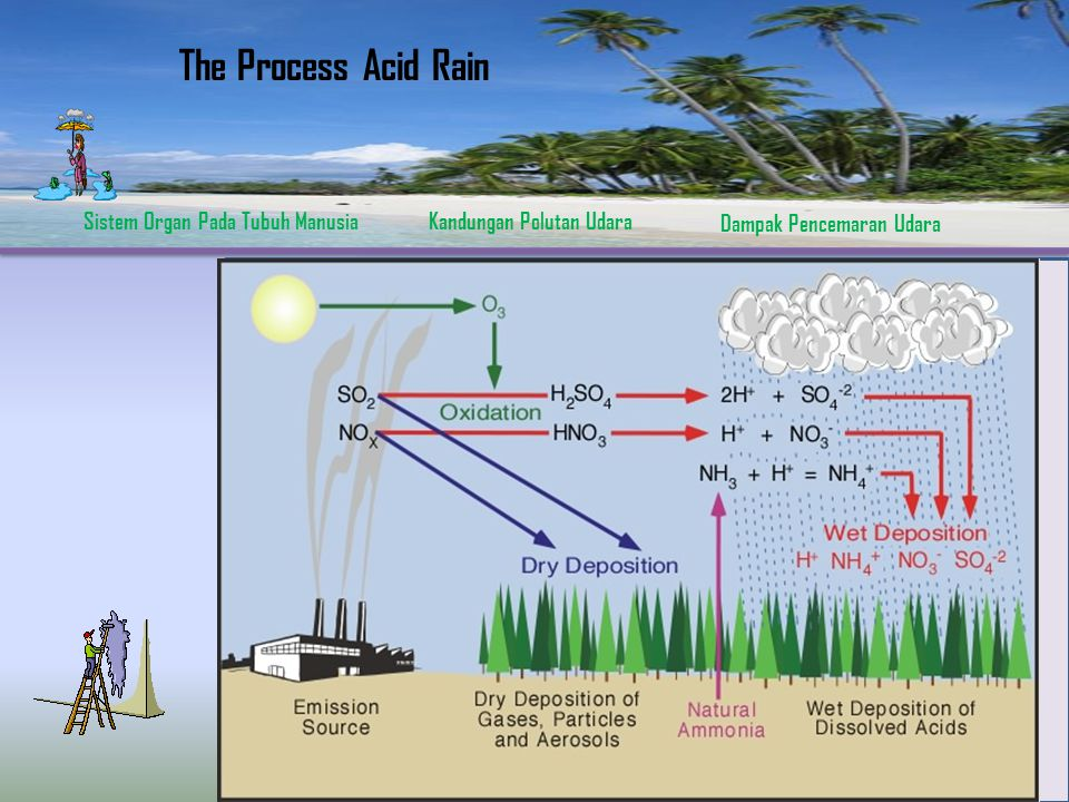 The Process Acid Rain