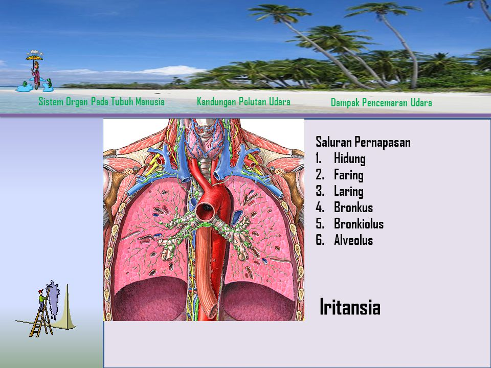 Iritansia Saluran Pernapasan Hidung Faring Laring Bronkus Bronkiolus