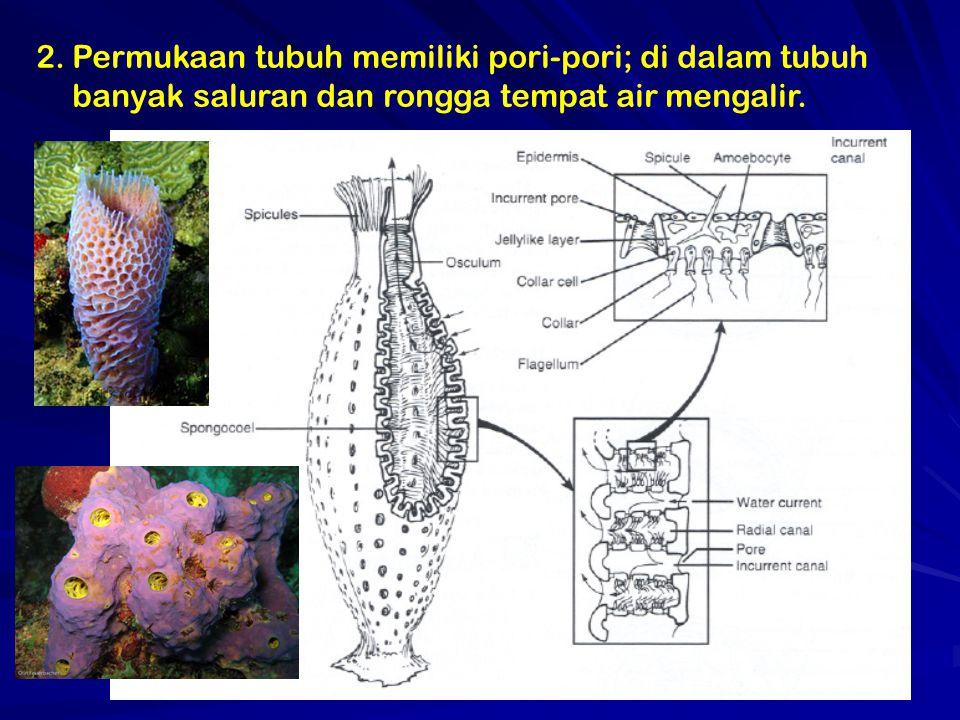 Permukaan tubuh memiliki pori-pori; di dalam tubuh banyak saluran dan rongga tempat air mengalir.