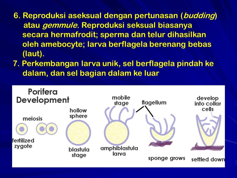 6. Reproduksi aseksual dengan pertunasan (budding)